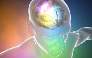 The brain neurotransmitters