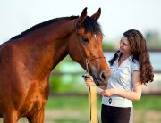 Equine Therapy in addiction treatment