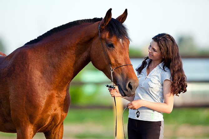 equine therapy research paper