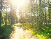 sunshine on trail